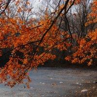 Как грустный взгляд, люблю я осень :: Наталья Лакомова