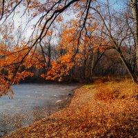 Погожий денек ноября :: Наталья Лакомова