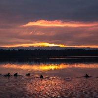 Утки на закате :: Славомир Вилнис