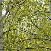 Мысли тянутся в весну с осени :: NICKIII Михаил Г.