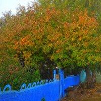 Осень у калитки :: лидия Кашицина