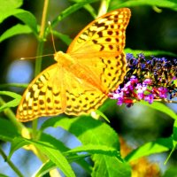 Краски природы :: Юлия Букша