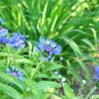 цветок :: Виталий Прокопчук