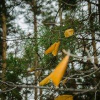 Вот и осень..... :: Алексей Бортновский