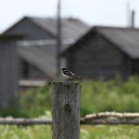 Одна маленькая птичка... :: Galina S*