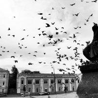 ''Достоевский и голуби'' :: Александр Комов