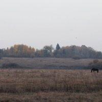 Туман :: Александра Старых