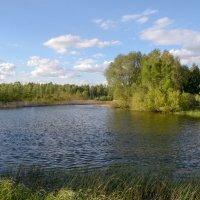 озеро :: Елена Осинцева