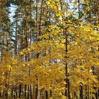 Прозрачный лес :: Лидия (naum.lidiya)