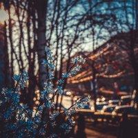 Золотое утро :: Юлия Хавротина