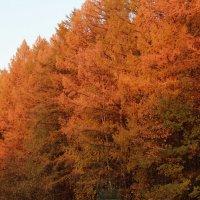 Осенний лес :: Наташа Шамаева