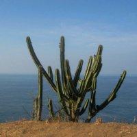 Мексиканская флора :: Сергей Карачин