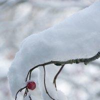 Пришла зима :: Игорь Чубаров