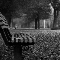 Осень! :: Владимир Самышев
