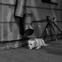 я жду тебя... :: Oksana K