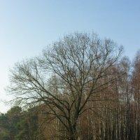 могучее дерево :: Tatsiana Latushko