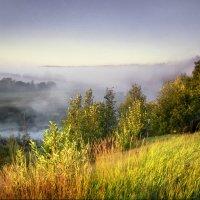 Молочное в тумане :: Валерий Талашов