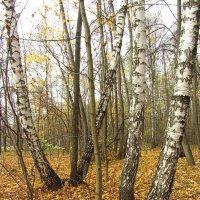 Осень-2012 - Img_7691 :: Андрей Лукьянов