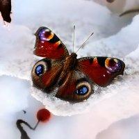 Бабочка на снегу :: Татьяна Кадочникова