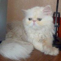 Мой котя. :: Чария Зоя
