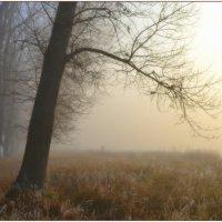 Утро :: Svetlana Kravchenko