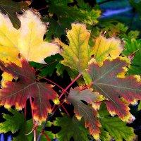 Осенний калейдоскоп... :: *MIRA* **