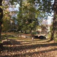 Осень в парке :: Галина Galyazlatotsvet