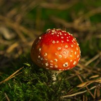 Mushroom among moss in the forest :: Сергей