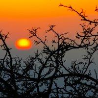 Солнце - желток мира :: Татьяна Гордеева