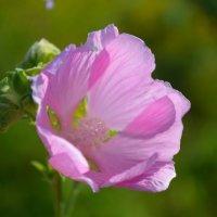 цветок :: Окcана Гетманец