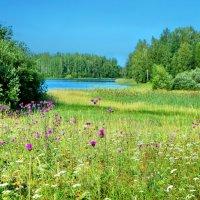 Островок в Ферапонтовском озере :: Валерий Талашов