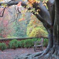 Осенний сад :: anna borisova