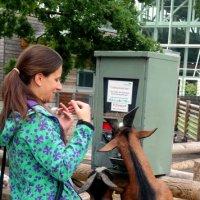 Отойди, коза, этот банкомат для козлов... :: Евгения Кирильченко
