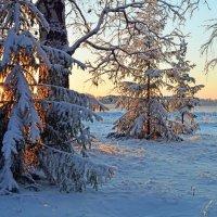 Новая  зима :: Геннадий С.