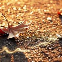 Мертвая осень :: Рустам Шорахимов