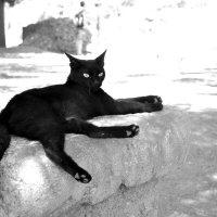 кошка позирует на античных развалинах :: Nina sofronova