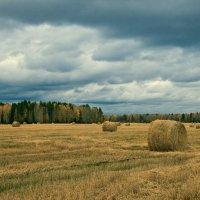 Осеннее поле :: Дмитрий Земсков