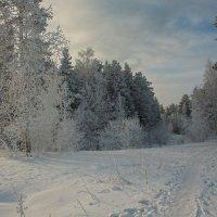 Снежная тропинка :: vladimir Bormotov