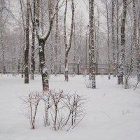 В парке зима :: Татьяна Ломтева