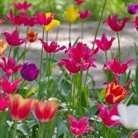 Городские цветы. :: Геннадий Александрович