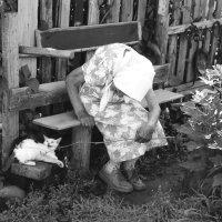 Зоя играет с котенком :: Валерий Талашов