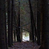 В лесу :: Gotardo Ro