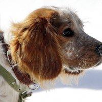 Пёс.... :: Валерия  Полещикова