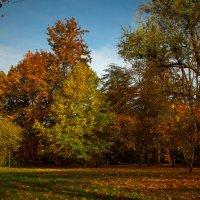 Осенняя флора :: Alexander Andronik