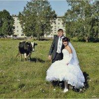 Корова в подарок :: Дмитрий Конев