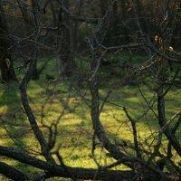 Очарование лесом :: Татьяна Silueta