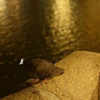 одинокая птица :: Pavel Stolyar