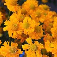 Солнечные цветы :: Галина Стрельченя