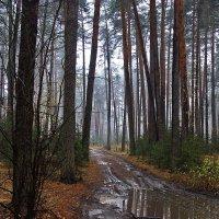 Дождей осенних колея... :: Лесо-Вед (Баранов)