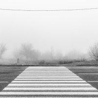 В тумане :: Lesli Suzumi